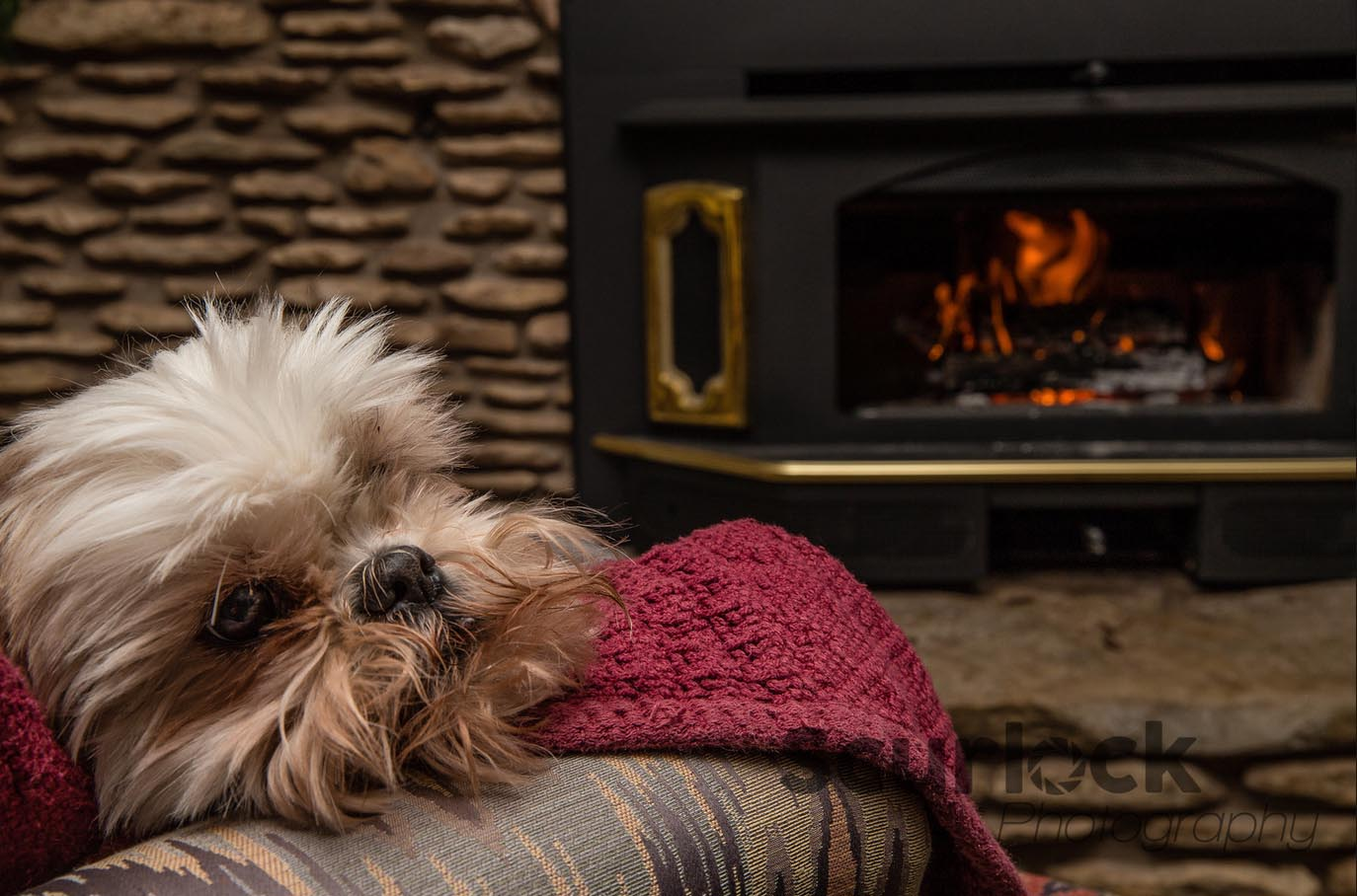 Mo Jo LOVES the fireplace in Rocky Overlook at Scurlock Farms!