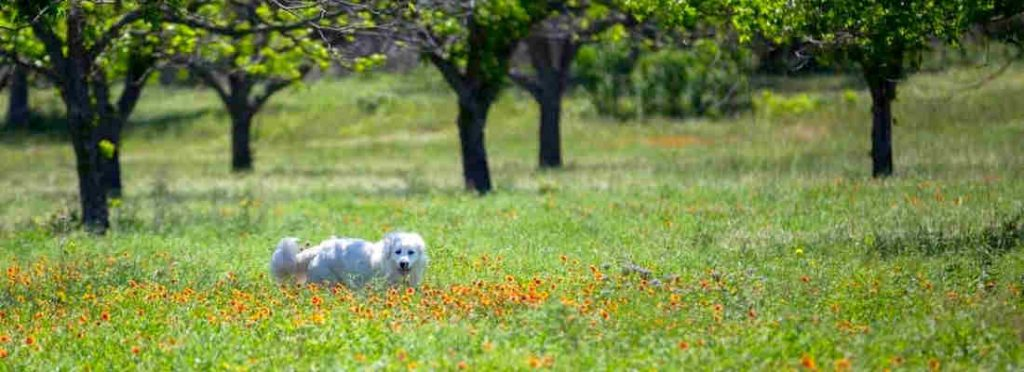 Pet at Scurlock Farms