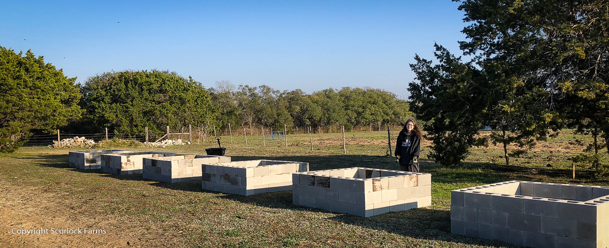 Raised beds at Scurlock Farms, Georgetown, TX (Austin)