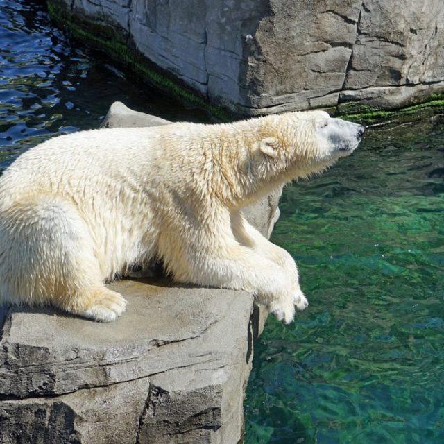polar-bear-1024x682